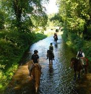 Visit Crossogue Equestrian for Wonderful Horse Riding Holidays